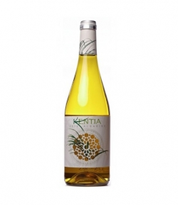 KENTIA 70 CL.